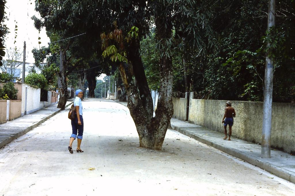 Baum auf der Strasse